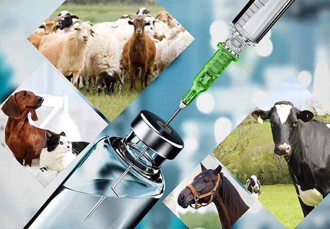 Top Veterinary Medicine Companies in India | Iskon Remedies